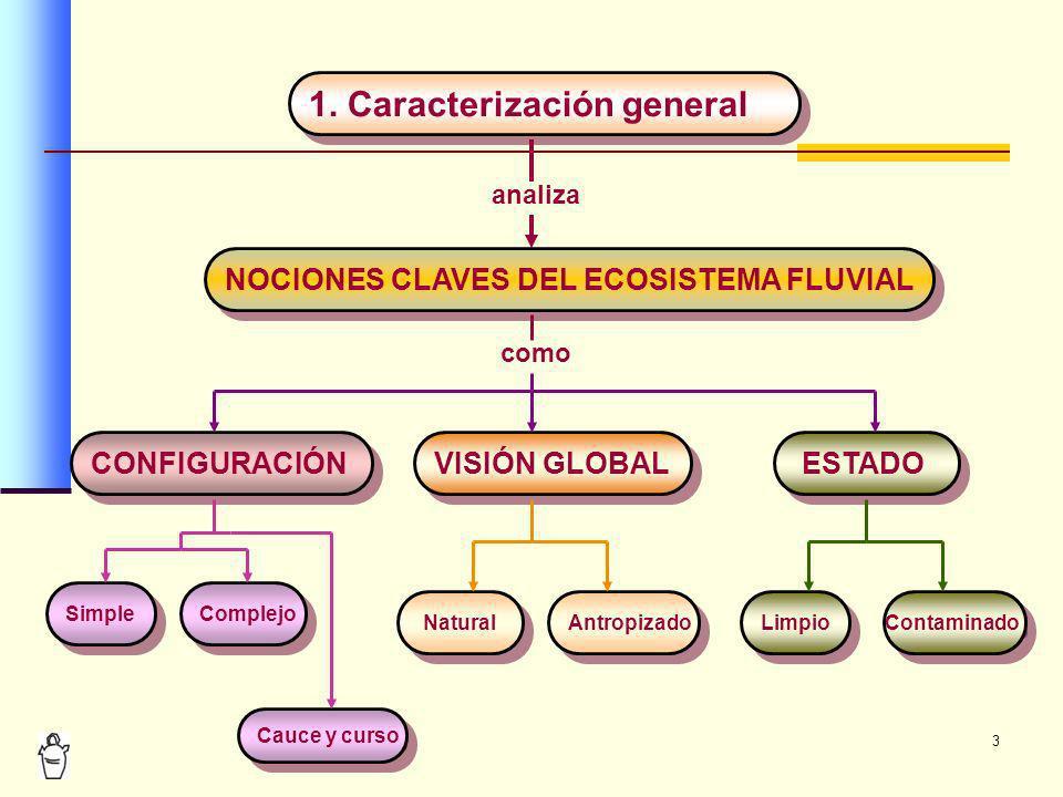 3 CONFIGURACIÓN VISIÓN GLOBAL ESTADO Simple Complejo 1. Caracterización general Limpio Contaminado Natural Antropizado analiza NOCIONES CLAVES DEL ECO