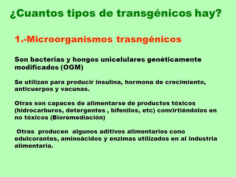 1.-Microorganismos trasngénicos Son bacterias y hongos unicelulares genéticamente modificados (OGM) Se utilizan para producir insulina, hormona de cre