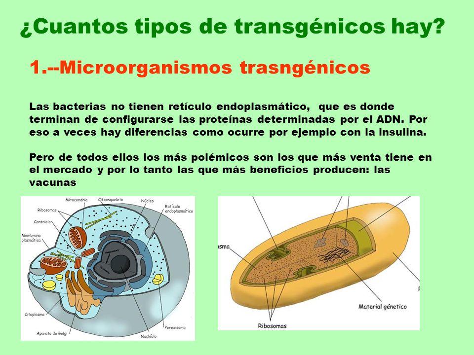 1.--Microorganismos trasngénicos Las bacterias no tienen retículo endoplasmático, que es donde terminan de configurarse las proteínas determinadas por