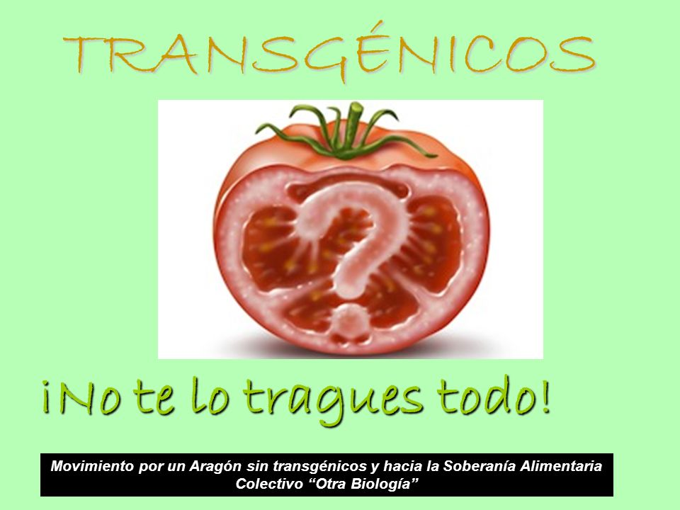 TRANSGÉNICOS ¡No te lo tragues todo! Movimiento por un Aragón sin transgénicos y hacia la Soberanía Alimentaria Colectivo Otra Biología
