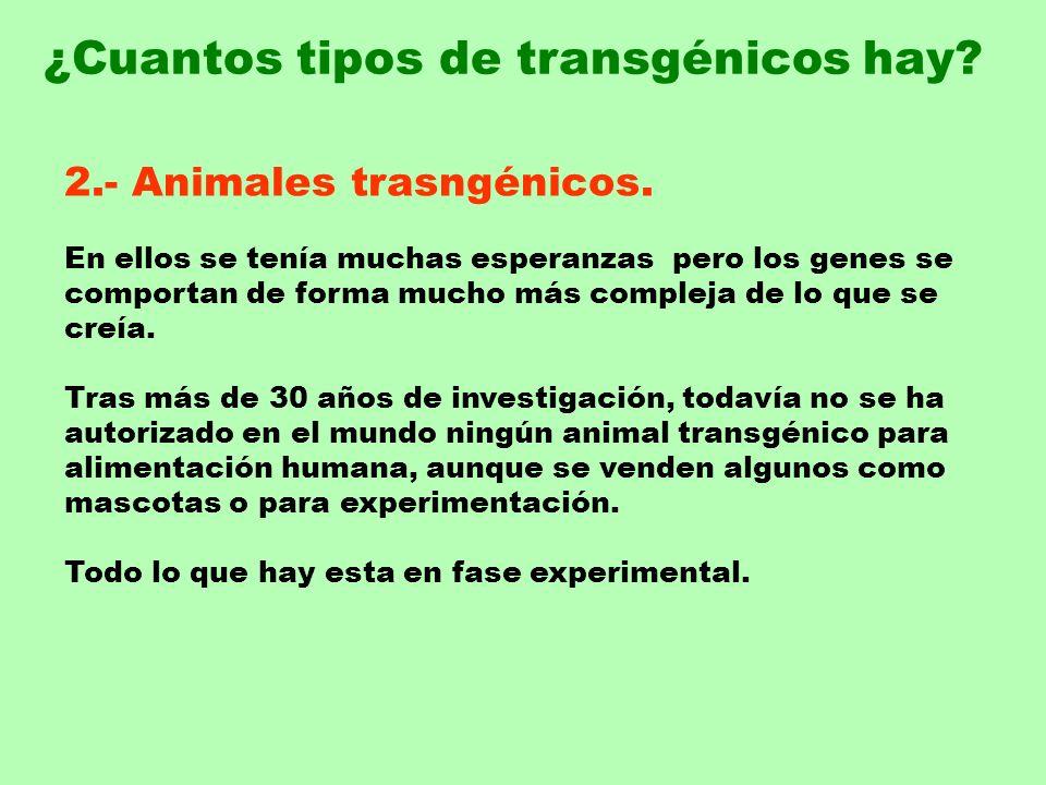 2.- Animales trasngénicos. En ellos se tenía muchas esperanzas pero los genes se comportan de forma mucho más compleja de lo que se creía. Tras más de