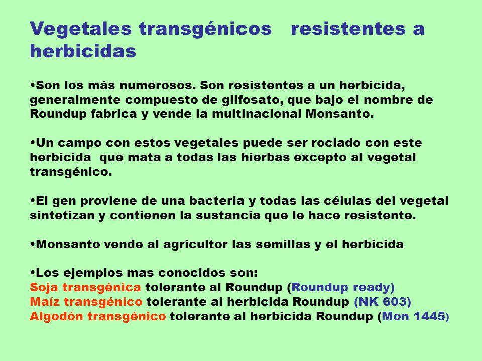 Vegetales transgénicos resistentes a herbicidas Son los más numerosos. Son resistentes a un herbicida, generalmente compuesto de glifosato, que bajo e