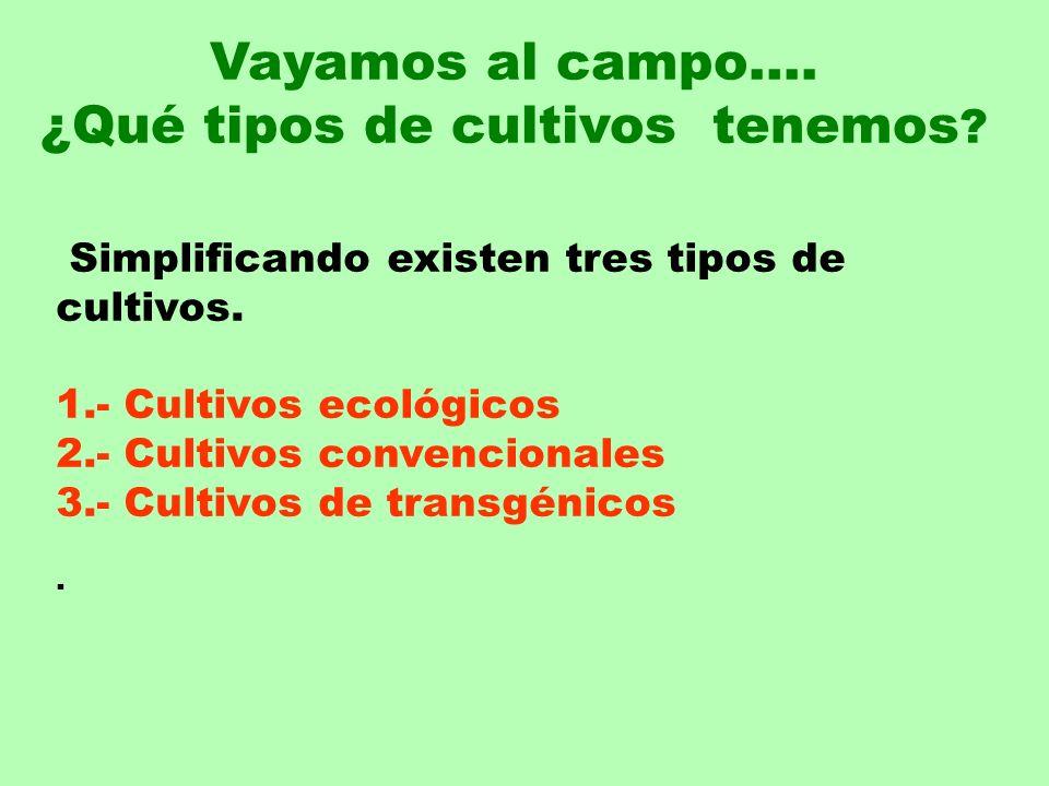Simplificando existen tres tipos de cultivos. 1.- Cultivos ecológicos 2.- Cultivos convencionales 3.- Cultivos de transgénicos. Vayamos al campo…. ¿Qu