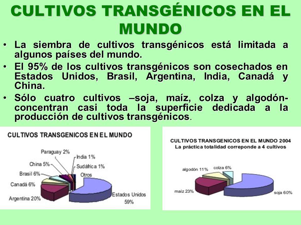CULTIVOS TRANSGÉNICOS EN EL MUNDO La siembra de cultivos transgénicos está limitada a algunos países del mundo. La siembra de cultivos transgénicos es