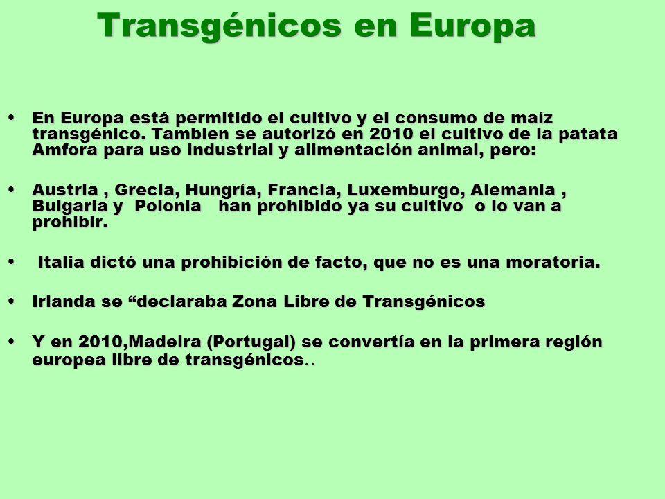 Transgénicos en Europa En Europa está permitido el cultivo y el consumo de maíz transgénico. Tambien se autorizó en 2010 el cultivo de la patata Amfor