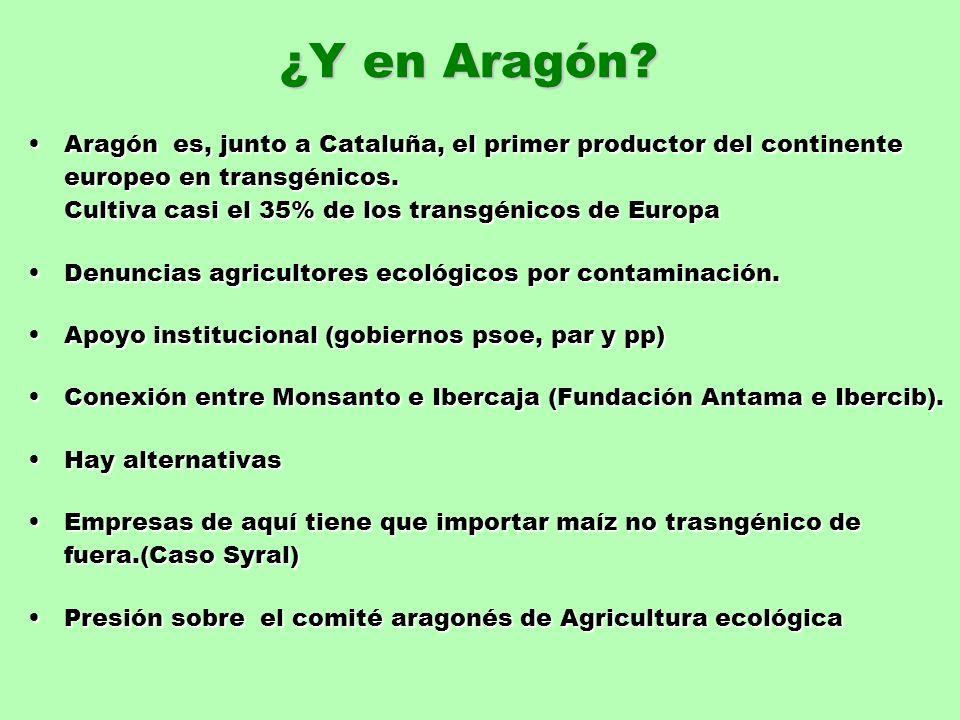 ¿Y en Aragón? Aragón es, junto a Cataluña, el primer productor del continente europeo en transgénicos. Cultiva casi el 35% de los transgénicos de Euro