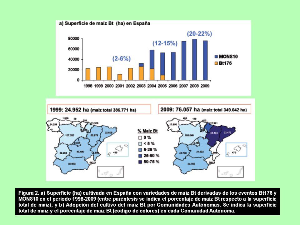 Figura 2. a) Superficie (ha) cultivada en España con variedades de maíz Bt derivadas de los eventos Bt176 y MON810 en el periodo 1998-2009 (entre paré