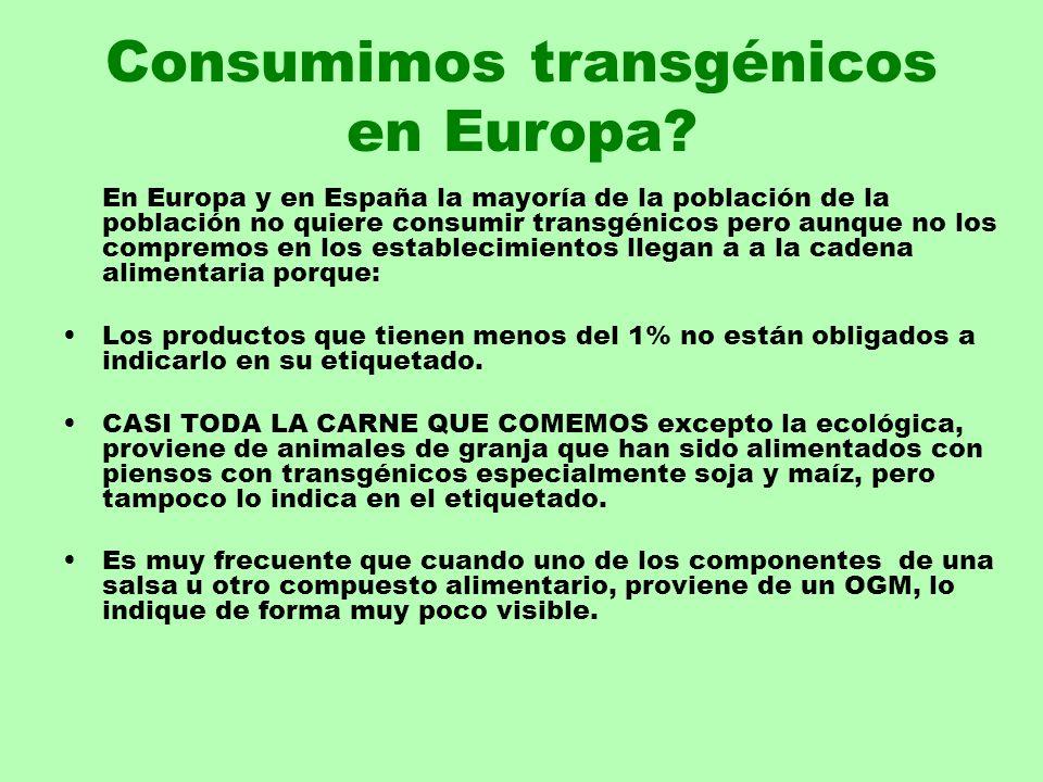Consumimos transgénicos en Europa? En Europa y en España la mayoría de la población de la población no quiere consumir transgénicos pero aunque no los