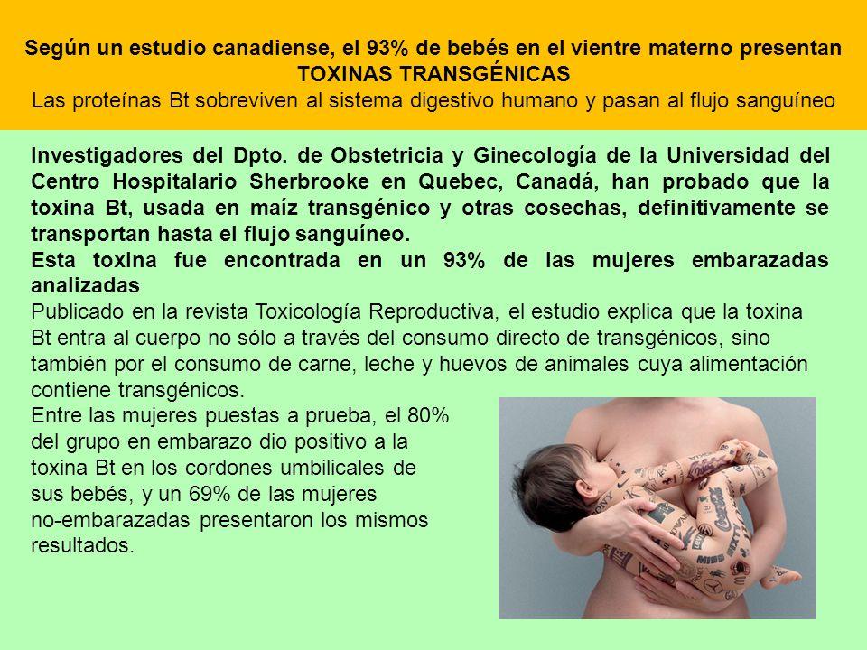 Según un estudio canadiense, el 93% de bebés en el vientre materno presentan TOXINAS TRANSGÉNICAS Las proteínas Bt sobreviven al sistema digestivo hum