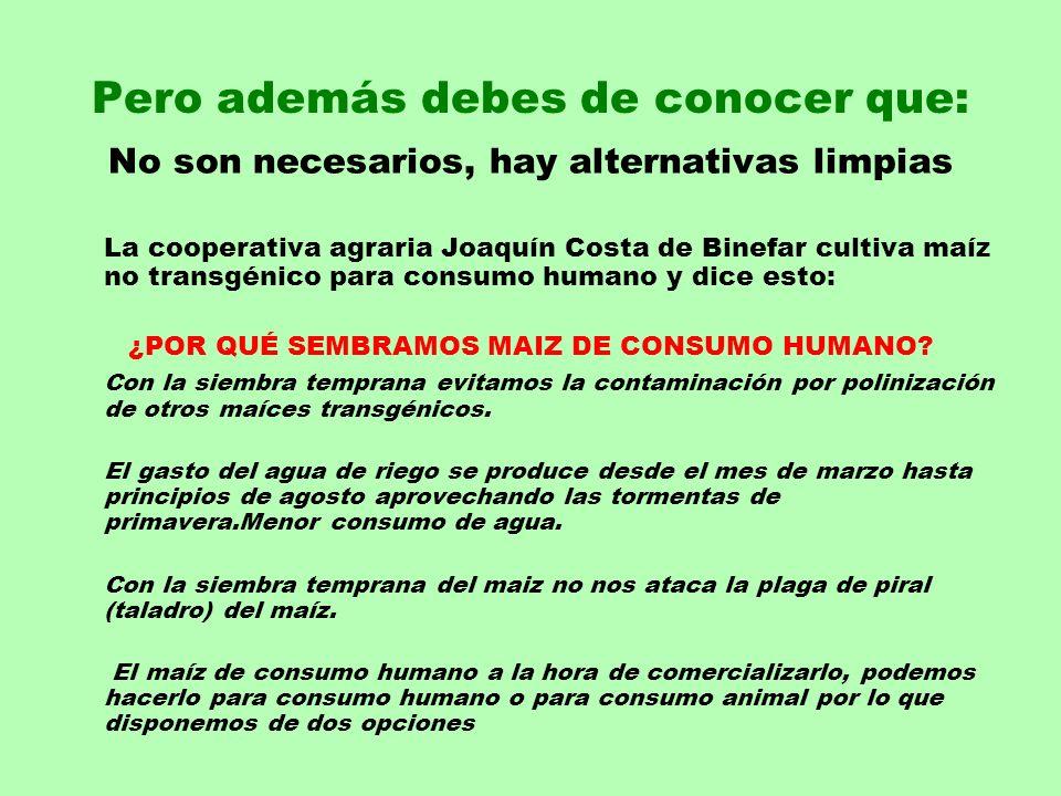 Pero además debes de conocer que: No son necesarios, hay alternativas limpias La cooperativa agraria Joaquín Costa de Binefar cultiva maíz no transgén