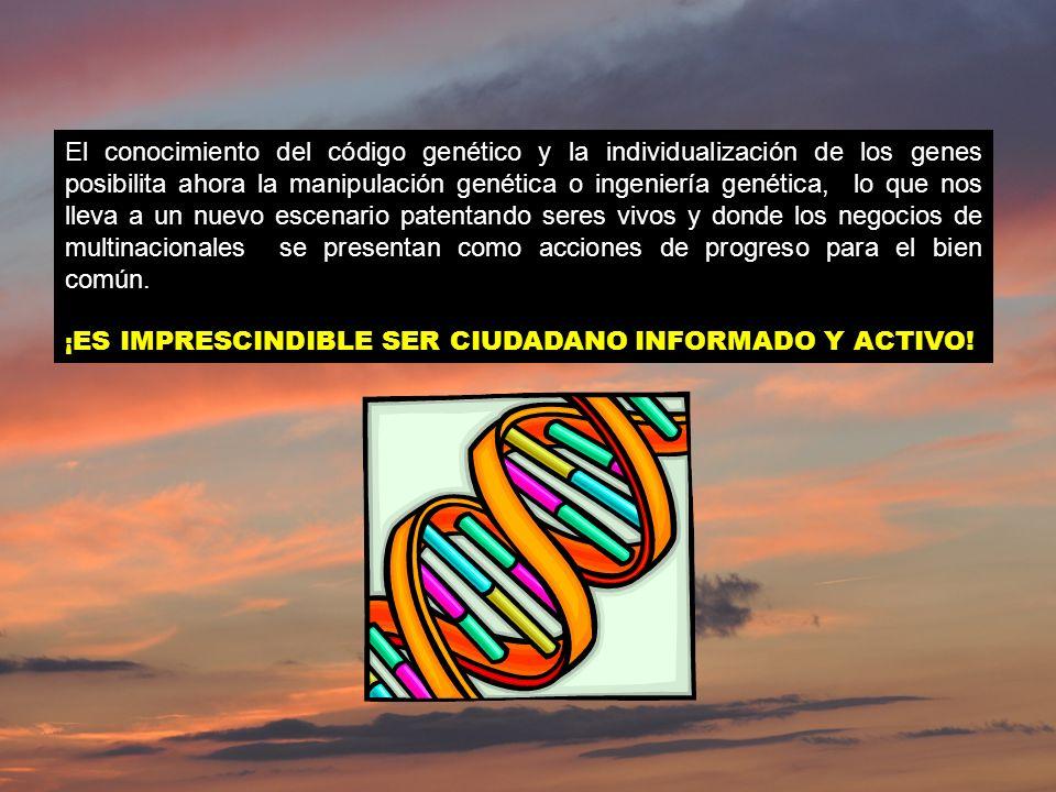 El conocimiento del código genético y la individualización de los genes posibilita ahora la manipulación genética o ingeniería genética, lo que nos ll