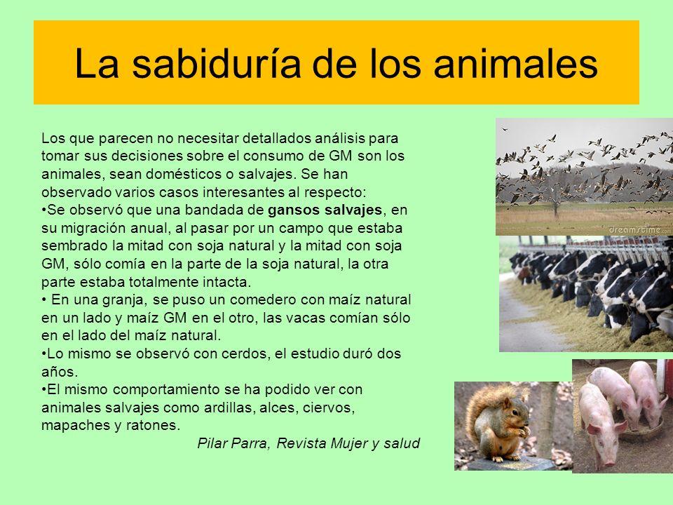 La sabiduría de los animales Los que parecen no necesitar detallados análisis para tomar sus decisiones sobre el consumo de GM son los animales, sean