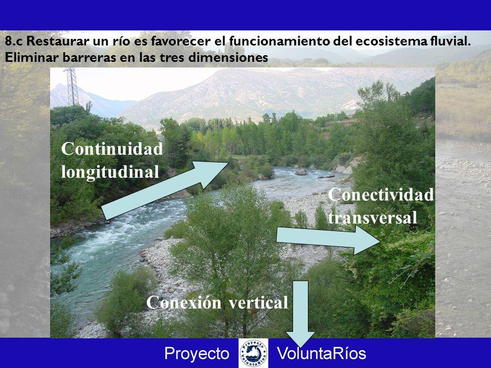 Conexión vertical Continuidad longitudinal Conectividad transversal 8.c Restaurar un río es favorecer el funcionamiento del ecosistema fluvial. Elimin