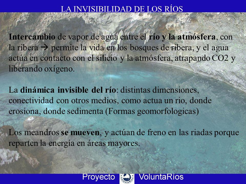 LA INVISIBILIDAD DE LOS RÍOS Intercambio de vapor de agua entre el río y la atmósfera, con la ribera permite la vida en los bosques de ribera, y el ag