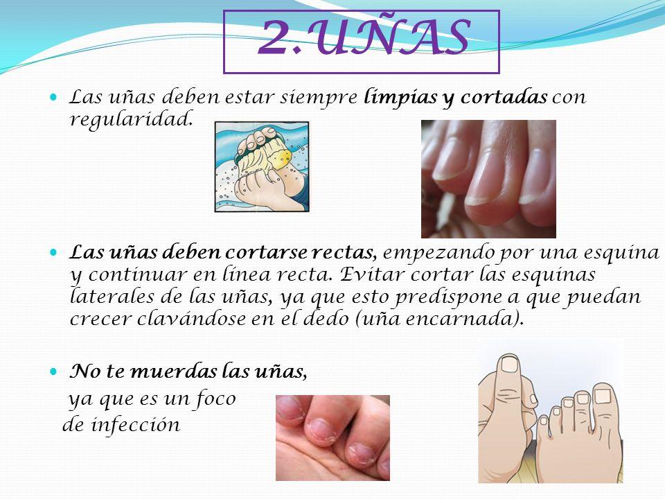 2.UÑAS Las uñas deben estar siempre limpias y cortadas con regularidad. Las uñas deben cortarse rectas, empezando por una esquina y continuar en línea