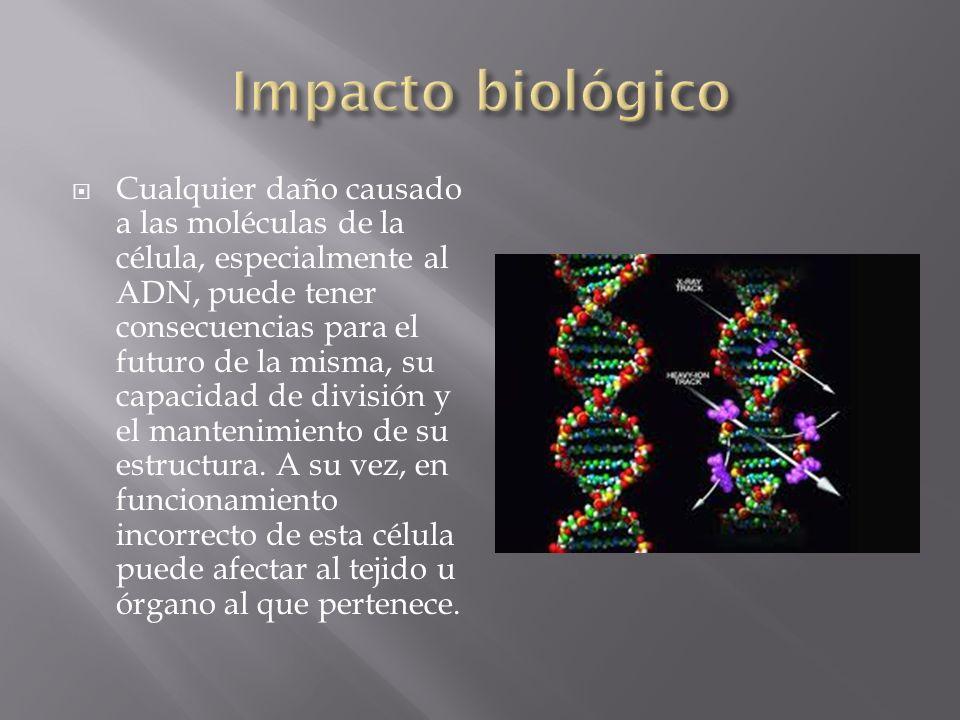 Cualquier daño causado a las moléculas de la célula, especialmente al ADN, puede tener consecuencias para el futuro de la misma, su capacidad de divis