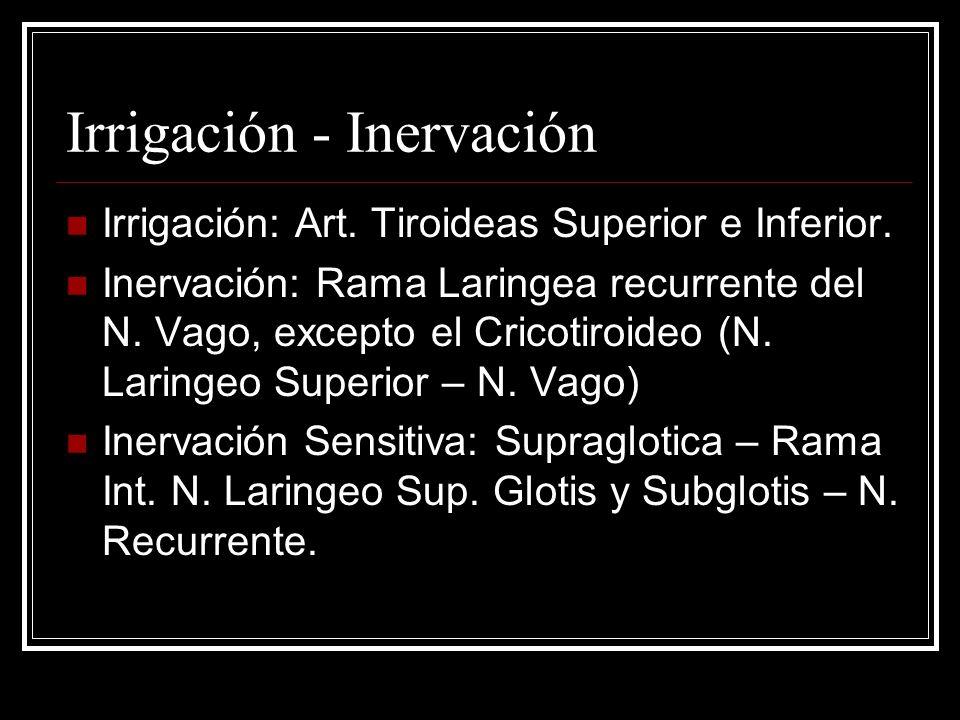 Irrigación - Inervación Irrigación: Art.Tiroideas Superior e Inferior.