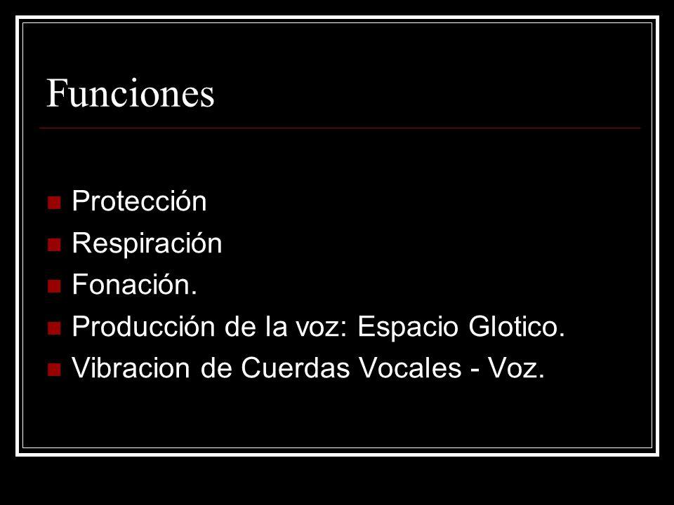 Funciones Protección Respiración Fonación.Producción de la voz: Espacio Glotico.