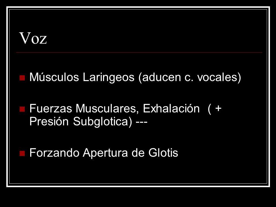 Voz Músculos Laringeos (aducen c.