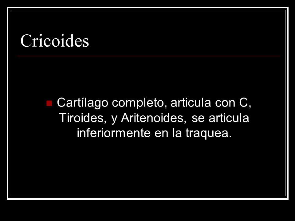 Cricoides Cartílago completo, articula con C, Tiroides, y Aritenoides, se articula inferiormente en la traquea.