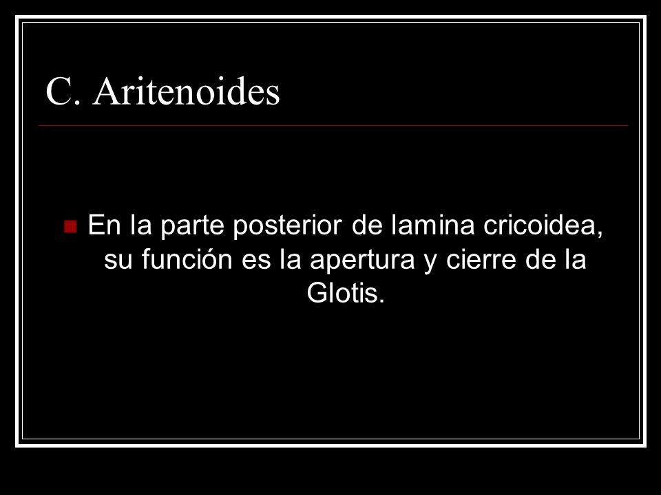 C. Aritenoides En la parte posterior de lamina cricoidea, su función es la apertura y cierre de la Glotis.