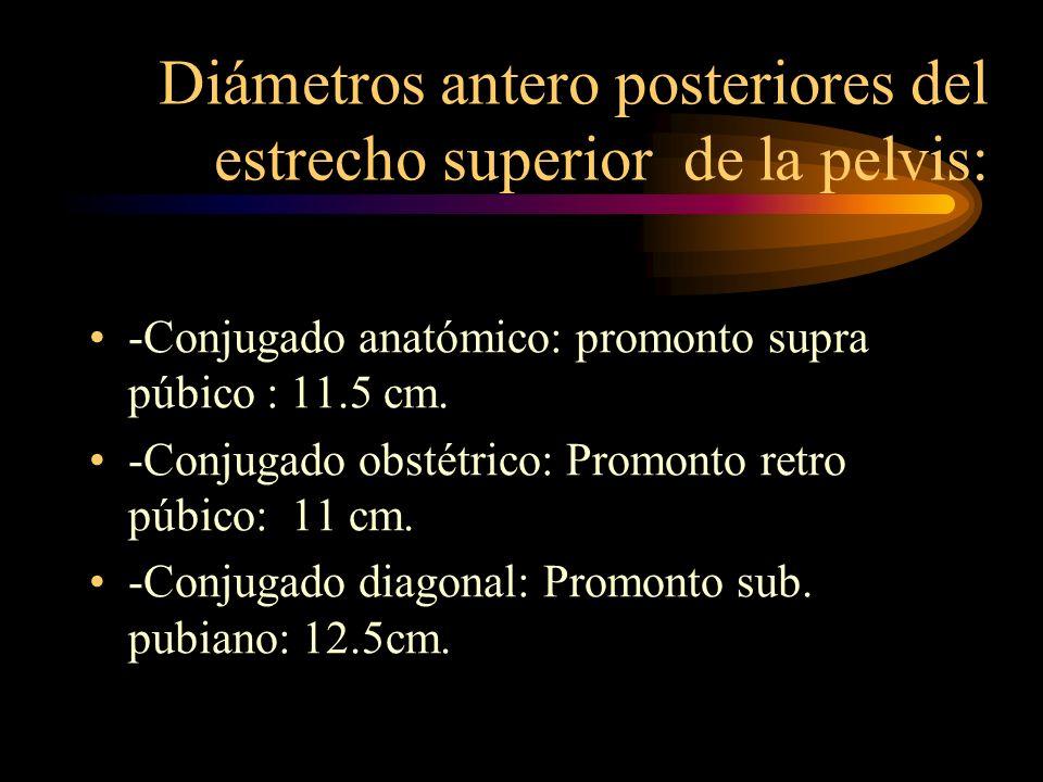 Diámetros antero posteriores del estrecho superior de la pelvis: -Conjugado anatómico: promonto supra púbico : 11.5 cm. -Conjugado obstétrico: Promont