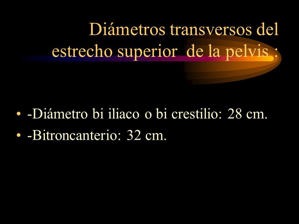 Diámetros transversos del estrecho superior de la pelvis : -Diámetro bi iliaco o bi crestilio: 28 cm. -Bitroncanterio: 32 cm.