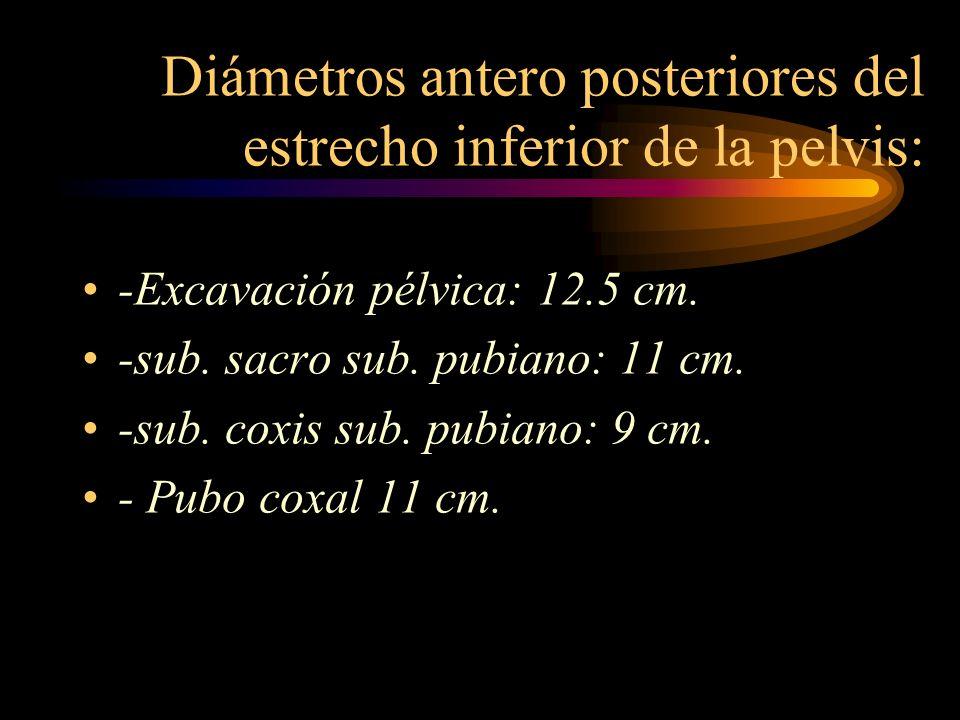 Diámetros antero posteriores del estrecho inferior de la pelvis: -Excavación pélvica: 12.5 cm. -sub. sacro sub. pubiano: 11 cm. -sub. coxis sub. pubia