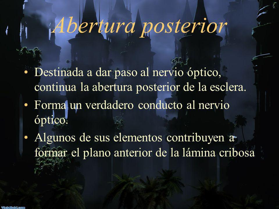 Abertura posterior Destinada a dar paso al nervio óptico, continua la abertura posterior de la esclera. Forma un verdadero conducto al nervio óptico.