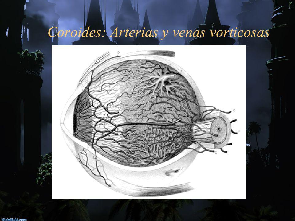 Coroides: Arterias y venas vorticosas