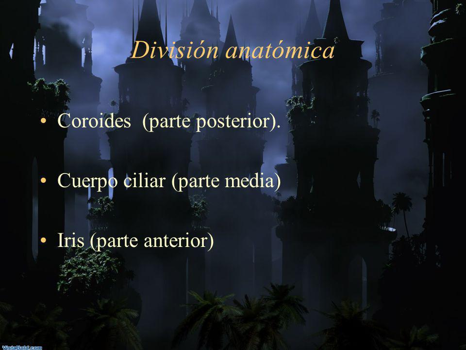 División anatómica Coroides (parte posterior). Cuerpo ciliar (parte media) Iris (parte anterior)