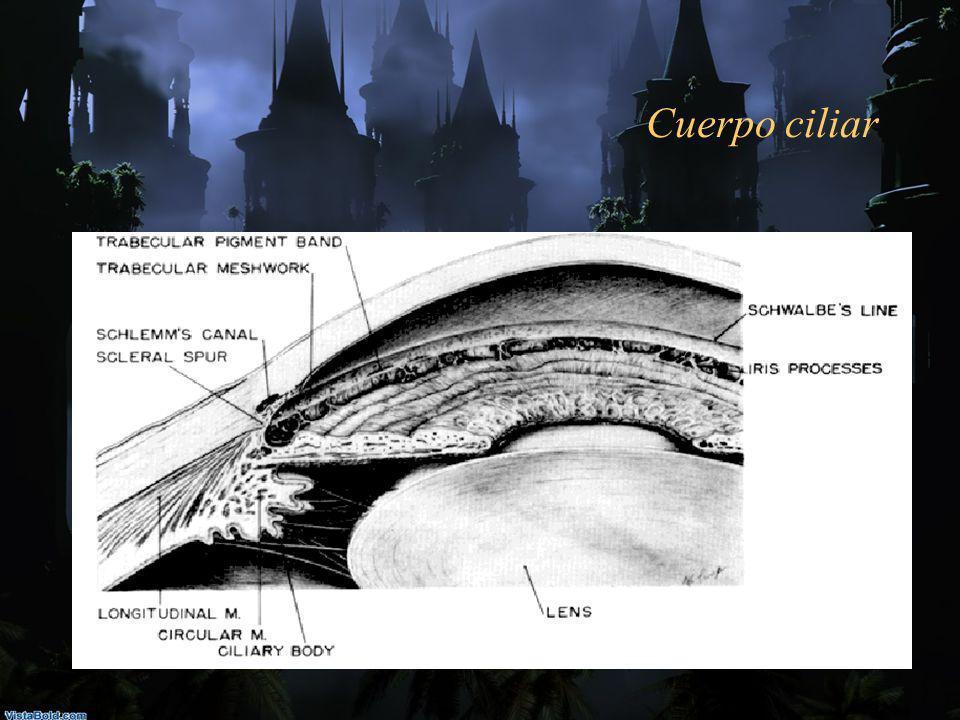 Cuerpo ciliar