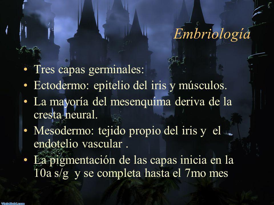 Embriología Tres capas germinales: Ectodermo: epitelio del iris y músculos. La mayoría del mesenquima deriva de la cresta neural. Mesodermo: tejido pr
