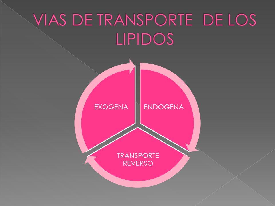 ENDOGENA TRANSPORTE REVERSO EXOGENA