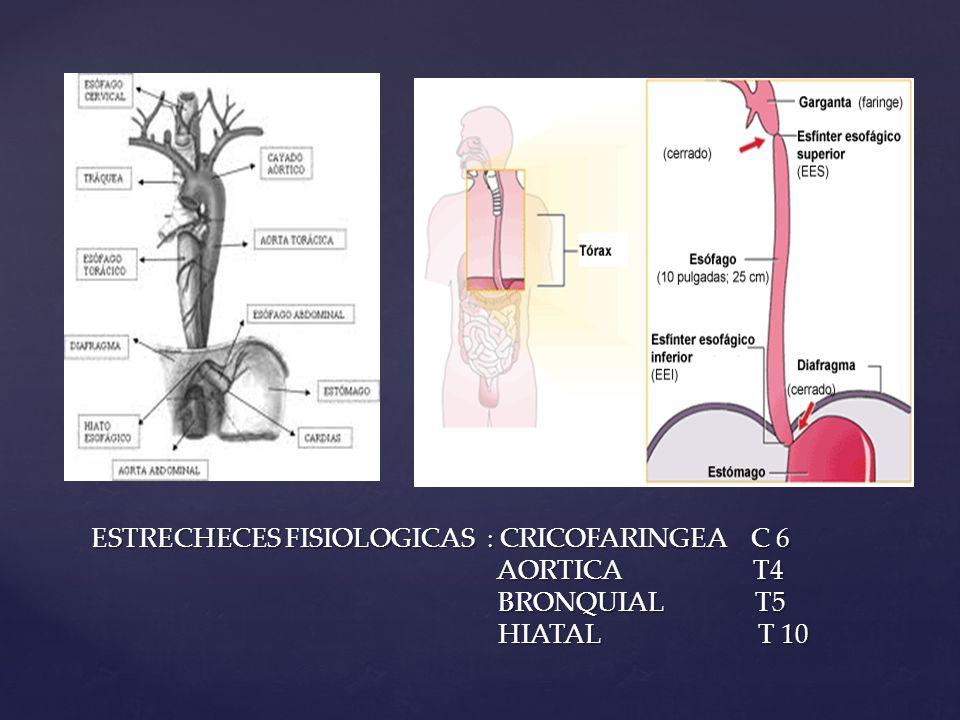 ESTRECHECES FISIOLOGICAS : CRICOFARINGEA C 6 AORTICA T4 BRONQUIAL T5 HIATAL T 10