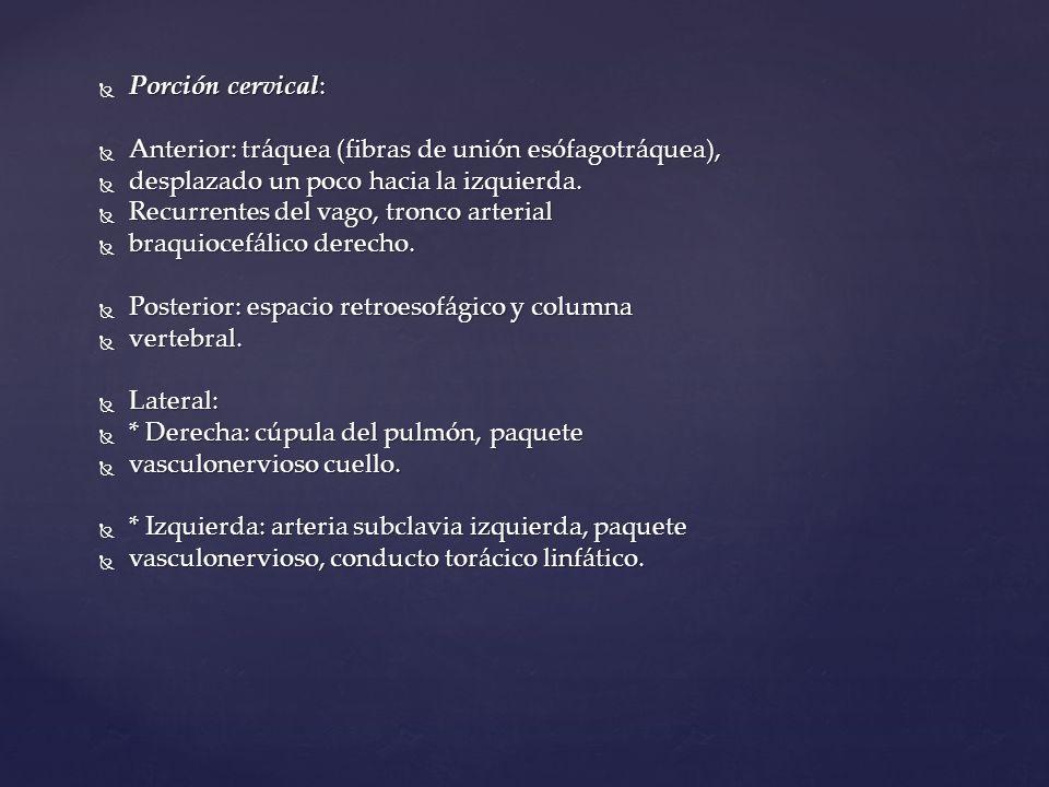 Porción cervical: Porción cervical: Anterior: tráquea (fibras de unión esófagotráquea), Anterior: tráquea (fibras de unión esófagotráquea), desplazado