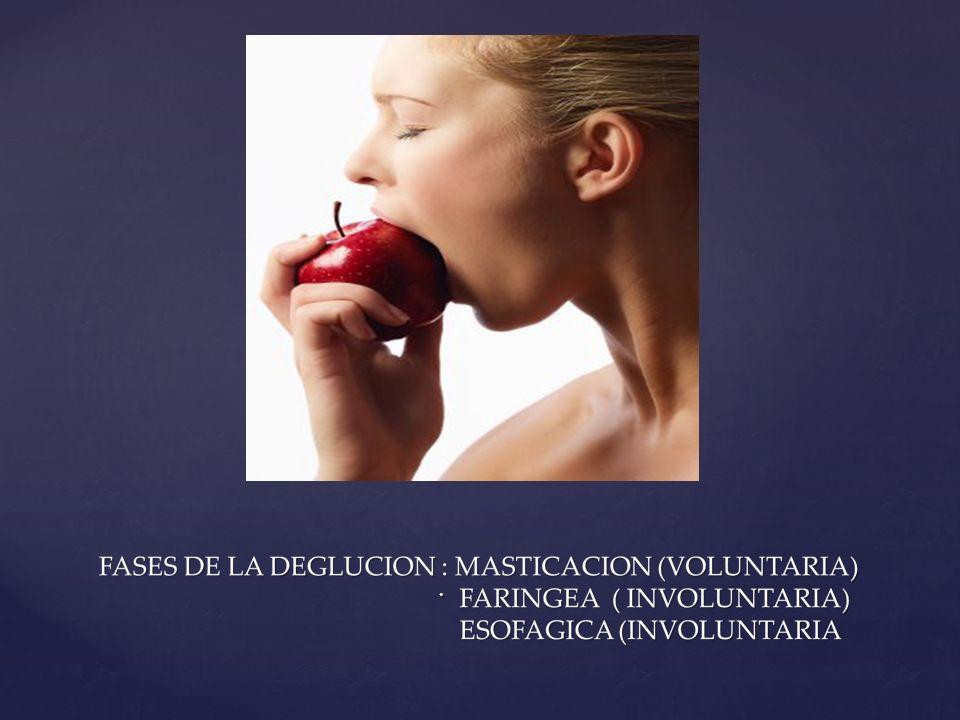 FASE DE LA MASTICACION: M.MASETERICOS FASE DE LA MASTICACION: M.MASETERICOS M.PTERIGOIDEOS MED.