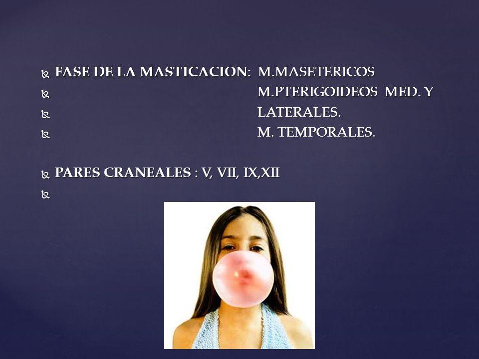 FASE DE LA MASTICACION: M.MASETERICOS FASE DE LA MASTICACION: M.MASETERICOS M.PTERIGOIDEOS MED. Y M.PTERIGOIDEOS MED. Y LATERALES. LATERALES. M. TEMPO
