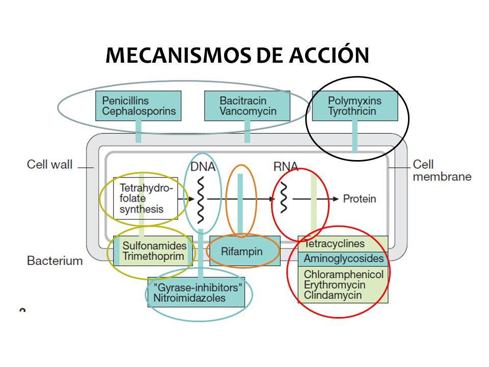 RESISTENCIA RESISTENCIA BACTERIANA: Mutación cromosómica ( espontánea ) Mediada por plásmidos ( DNA ) MECANISMOS: Producción de ß-lactamasas (hidrolizan anillo beta lactámico) Alteración de PBP (PLP) (proteína ligadora de penicilina) Alteraciones de permeabilidad de membrana externa Bombas de eflujo