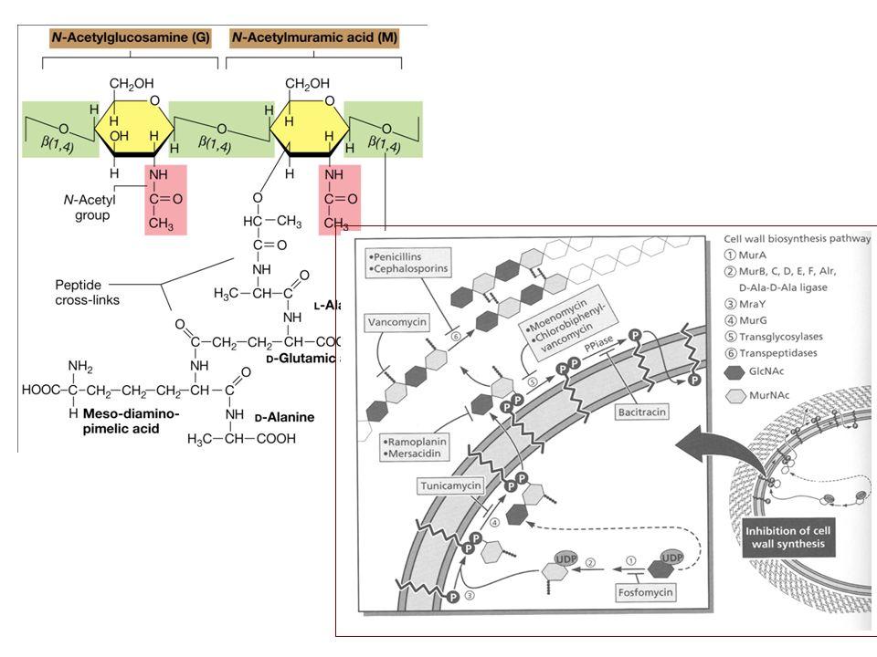 Cefalosporinas Clasificación