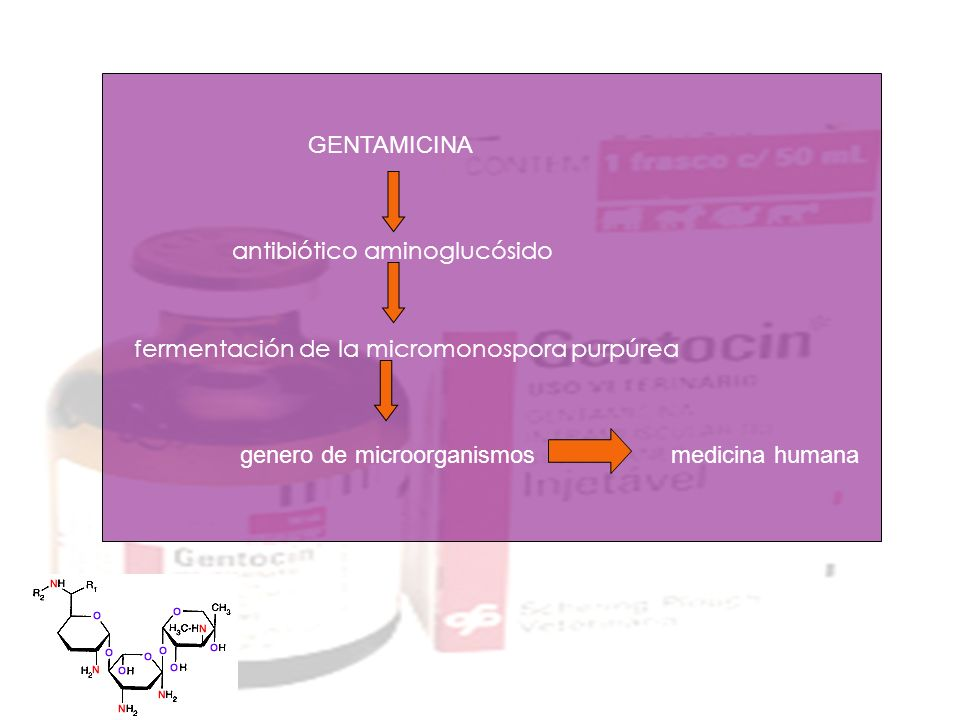 GENTAMICINA antibiótico aminoglucósido fermentación de la micromonospora purpúrea genero de microorganismosmedicina humana
