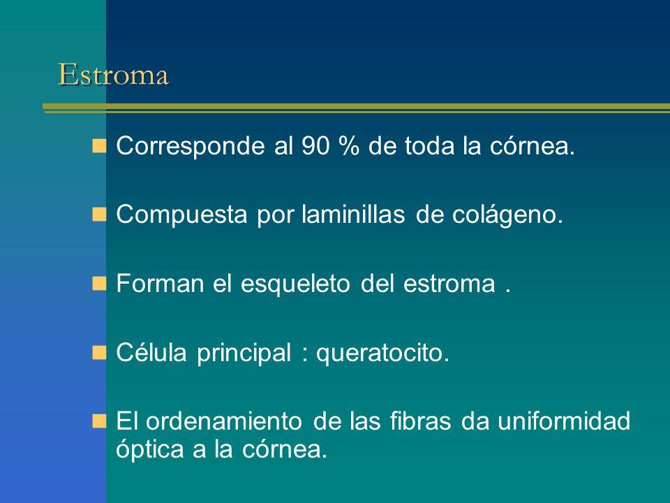 Estroma Corresponde al 90 % de toda la córnea. Compuesta por laminillas de colágeno. Forman el esqueleto del estroma. Célula principal : queratocito.