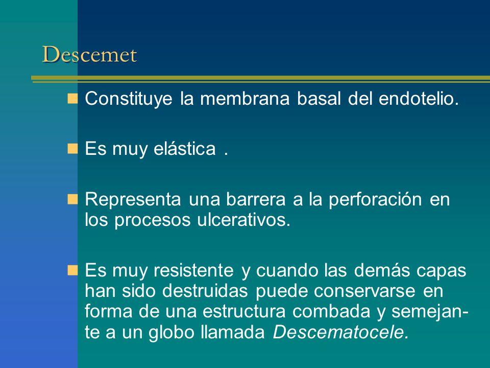 Descemet Constituye la membrana basal del endotelio. Es muy elástica. Representa una barrera a la perforación en los procesos ulcerativos. Es muy resi