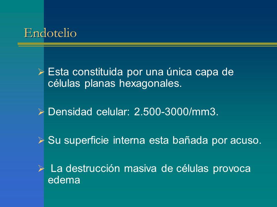 Endotelio Esta constituida por una única capa de células planas hexagonales. Densidad celular: 2.500-3000/mm3. Su superficie interna esta bañada por a