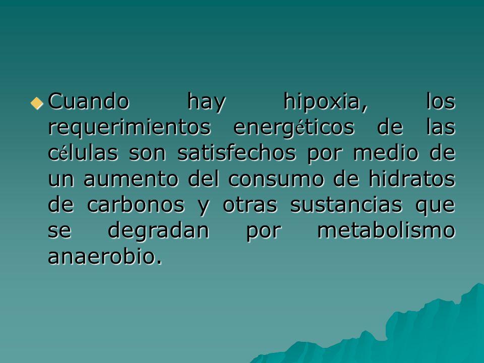 Cuando hay hipoxia, los requerimientos energ é ticos de las c é lulas son satisfechos por medio de un aumento del consumo de hidratos de carbonos y ot