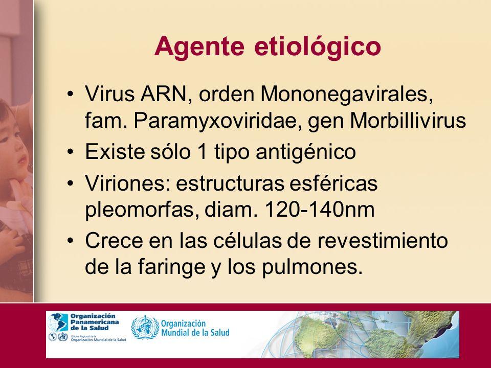 Agente etiológico Virus ARN, orden Mononegavirales, fam. Paramyxoviridae, gen Morbillivirus Existe sólo 1 tipo antigénico Viriones: estructuras esféri