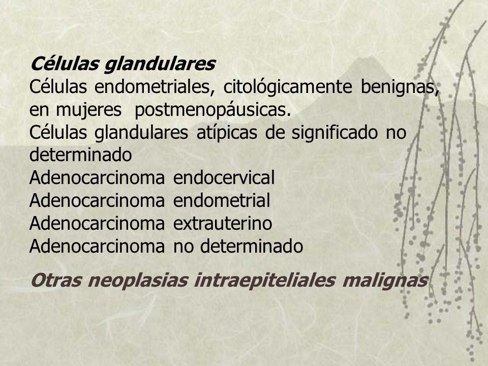 Células glandulares Células endometriales, citológicamente benignas, en mujeres postmenopáusicas. Células glandulares atípicas de significado no deter