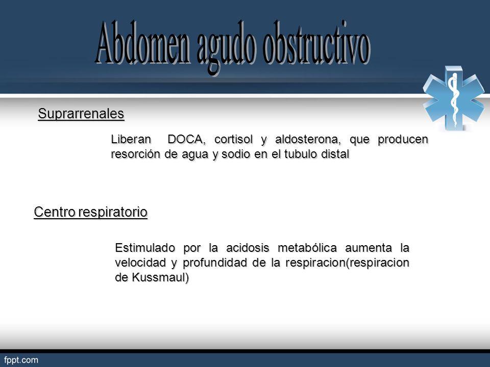 Suprarrenales Liberan DOCA, cortisol y aldosterona, que producen resorción de agua y sodio en el tubulo distal Centro respiratorio Estimulado por la a