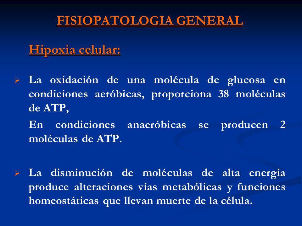 FISIOPATOLOGIA GENERAL Hipoxia celular: La oxidación de una molécula de glucosa en condiciones aeróbicas, proporciona 38 moléculas de ATP, En condicio