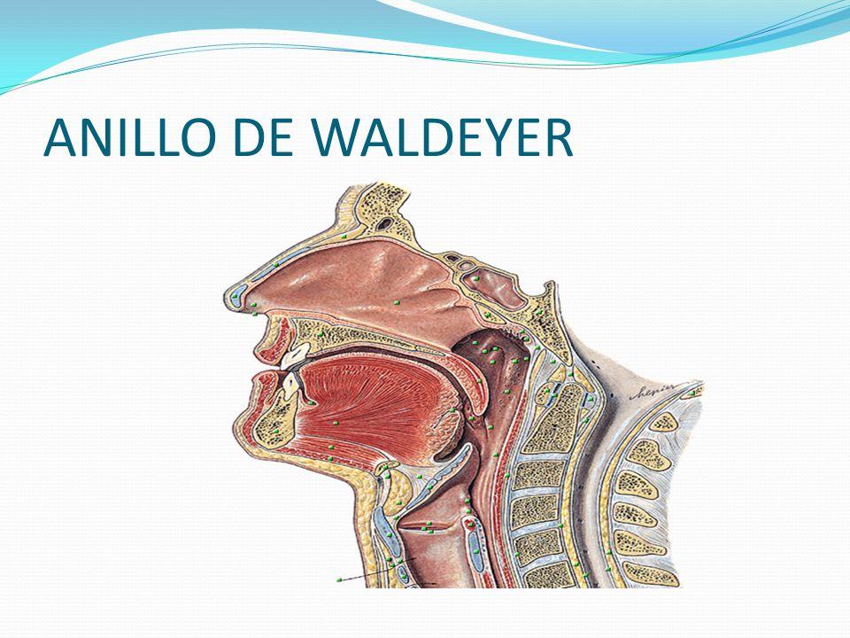 Amigdalitis cronica Odinofagia Presencia de exudado en las superficies de las amigdalas.